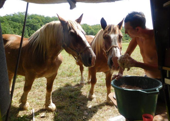 chevaux attendant repas